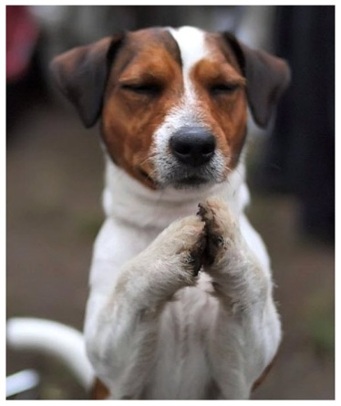dog_pray